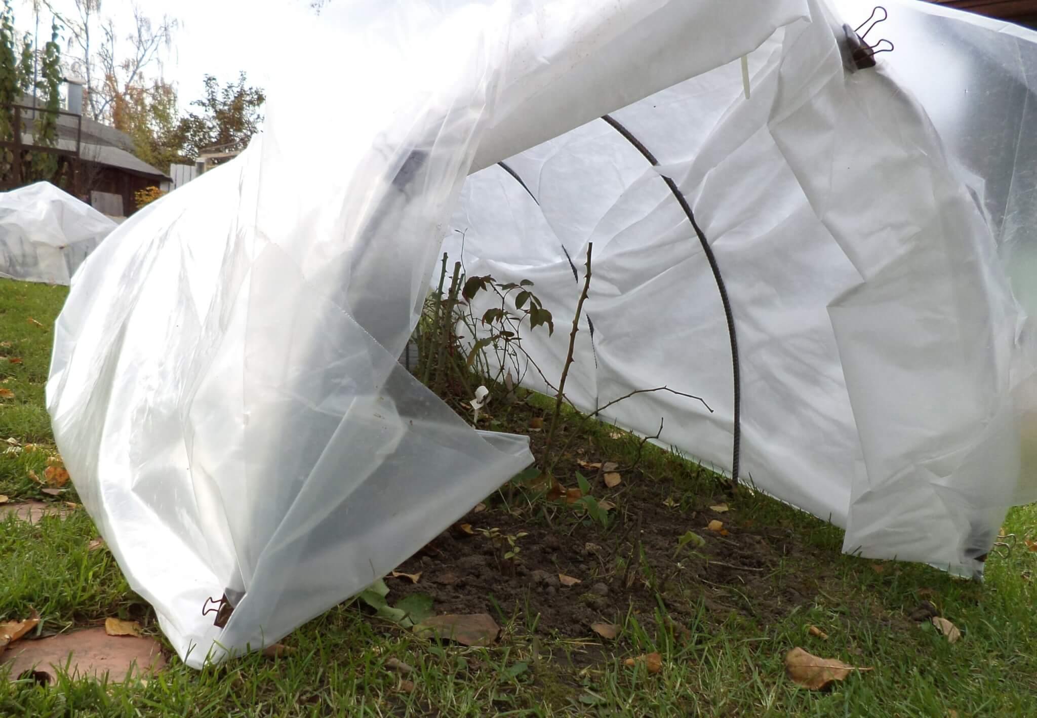 Вейгела осенью - как я подготавливаю растение к зиме