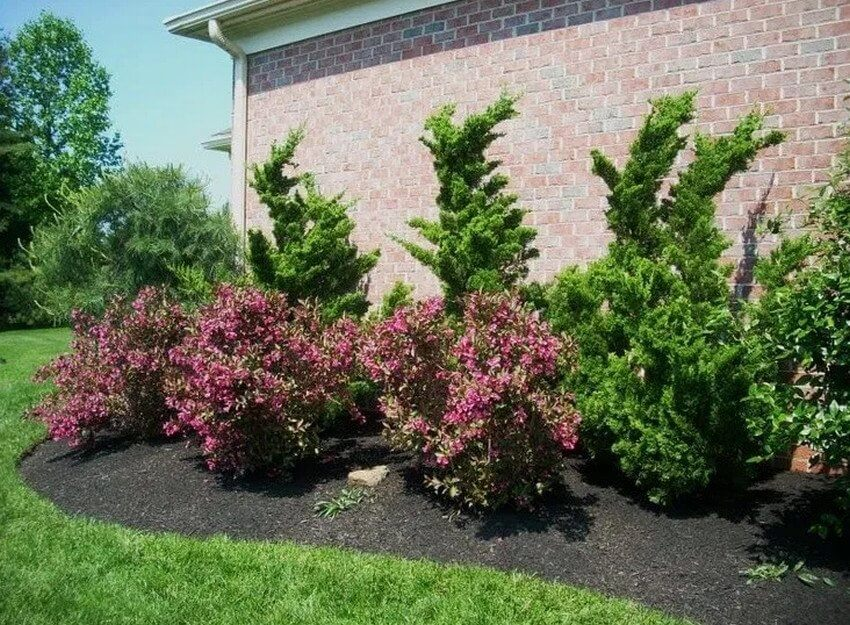 Вейгела для зонирования внутреннего пространства сада