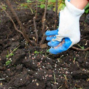 8 лайфхаков, чем подкормить вейгелу весной, летом и осенью