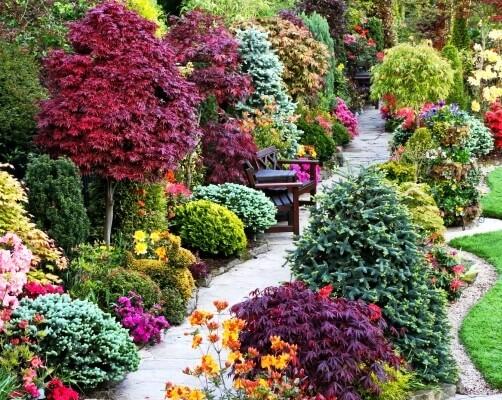 Какие декоративные кустарники посадить на даче: топ 15 многолетних, красивоцветущих, морозостойких растений