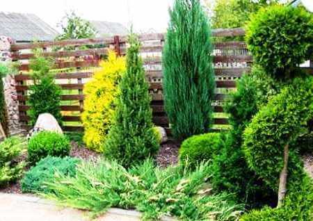 Какие кустарники посадить вдоль забора, как выбрать растения